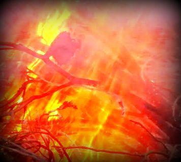 fuego2.jpg