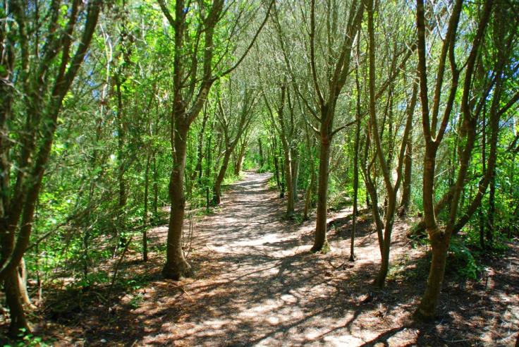 bosque2.jpg