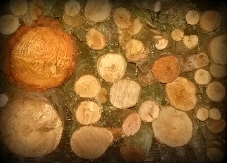 madera2.jpg